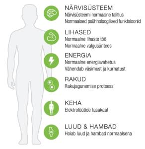 magneesiumi toime kehale